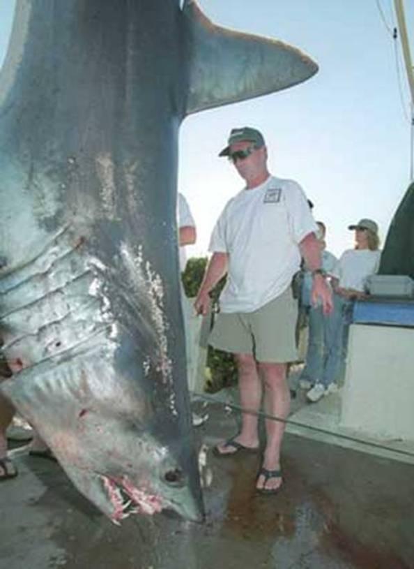 gambar hewan - foto ikan hiu terbesar di dunia