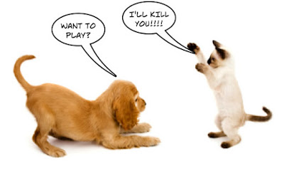 cat dog fight