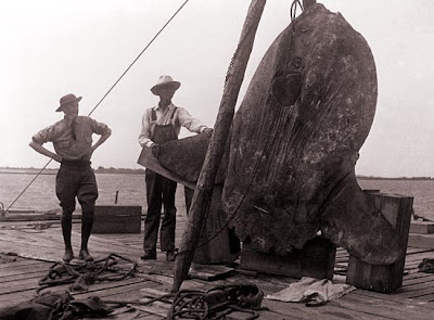 Swansboro, North Carolina - History: MOLA MOLA