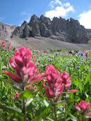 Field of Pastel