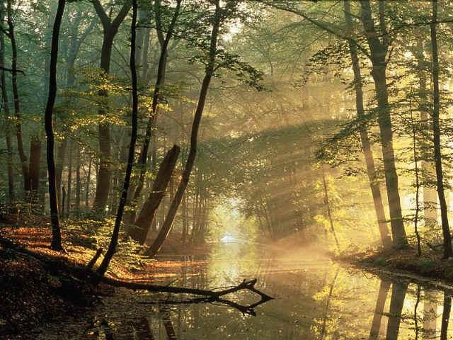 Bosque a las afueras de Chokoha Bosque2