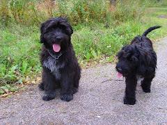 Basso ja Luigi 06.09.2008
