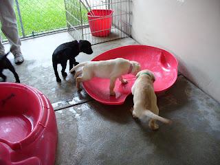 Puppy Park 2