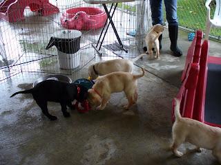 Puppy Park 5