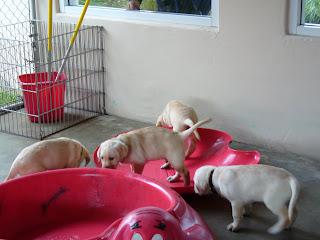 Puppy Park 6