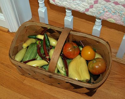 a basket of fresh veggies from Farmer Jim's garden