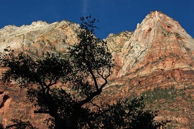 spectacular landscape greets you across from Zion Lodge