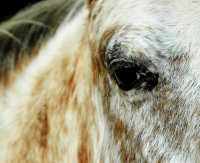 the sweetness of this horse is seen in her eyes
