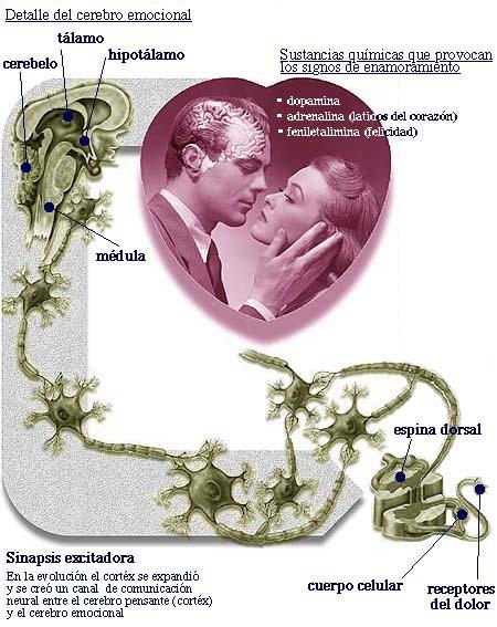 O que a química diz do beijo e da paixão: