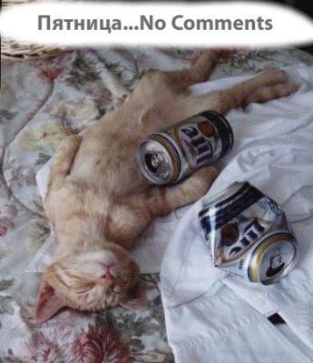 Кошки зажигают.Подборка смешных картинок.  Автор.