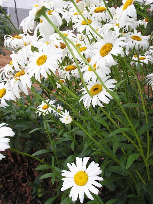 """""""Criar uma pequenina flor é um trabalho de eras."""" (William Blake)"""