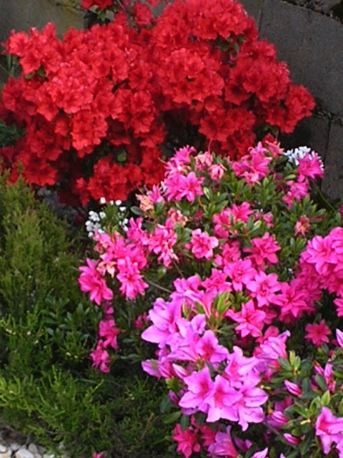 """""""Nós podemos conceber o que a humanidade seria se não conhecesse as flores?"""" (Maurice Maeterlinck)"""
