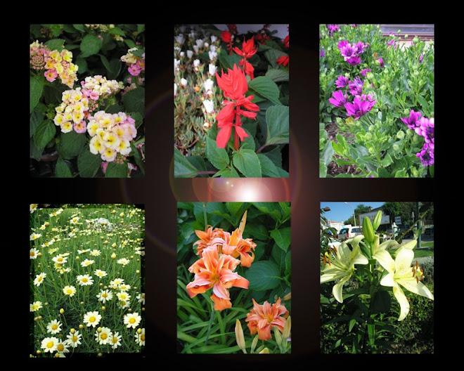 """""""Flores parecem planejadas para o consolo de humanidade ordinária."""""""