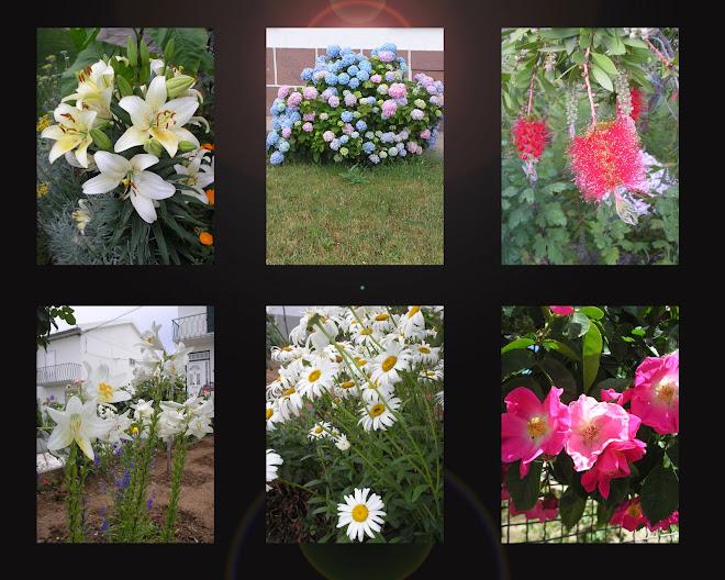 """""""A terra sorri nas flores."""" (E. E. Cummings)"""