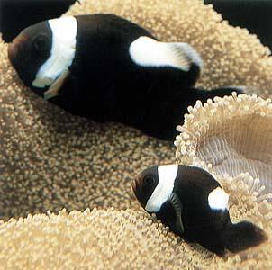 Beginner aquarium fish elements of the aquarium fish for Beginner freshwater fish