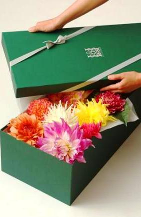 Flowers in a box by Lily Lodge