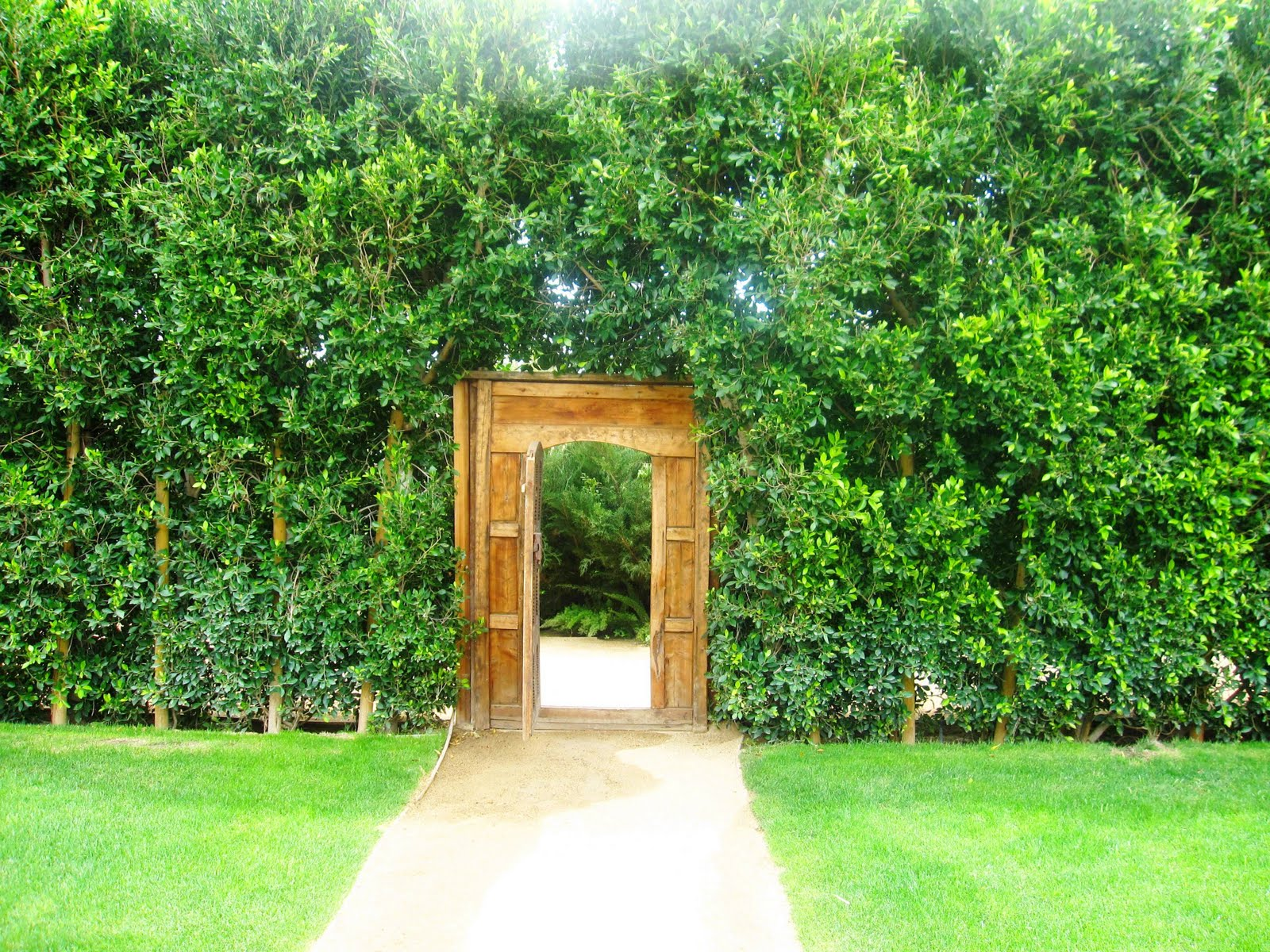 Green ficus surround a wood carved doorway leading to