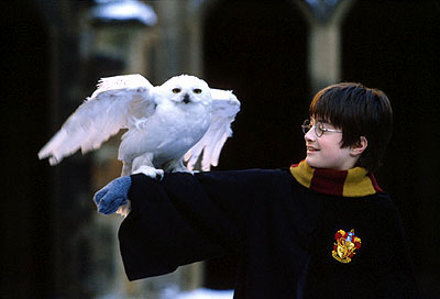 [Harry+and+Hedwig]