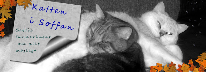 Katten i soffan