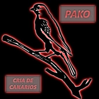 Los canarios de Pako
