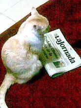 Safo leyendo los desvarios mundiales