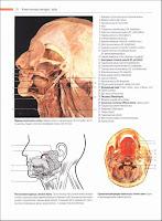 Скачать Атлас Анатомия человека