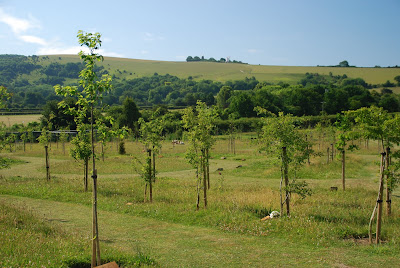 natural burial green