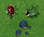 beetle war, free, flash, games, jogos, online
