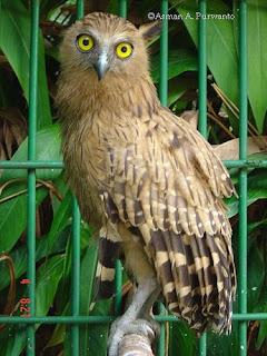 Jenis Burung Dan Binatang Lainnya Burung