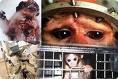 VIVISECCION, Experimentación con animales