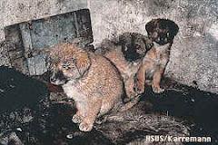 La producción china de pieles de perro y gato