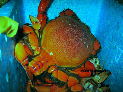 big orange anthropod in a bucket