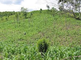 Karst y Agricultura