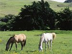 Upcountry Horses