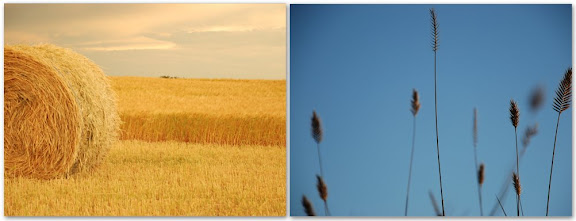 Prairie Wheat
