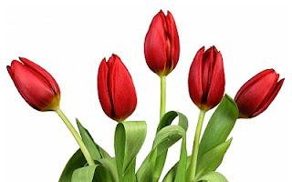 Imagen de flor hermosa