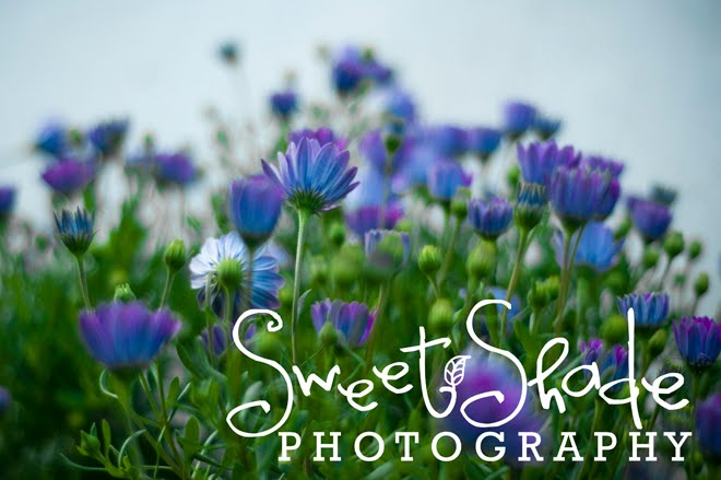Sweet Shade Photography