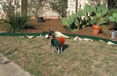 Divasofthedirt,rusty horse in bermuda grass