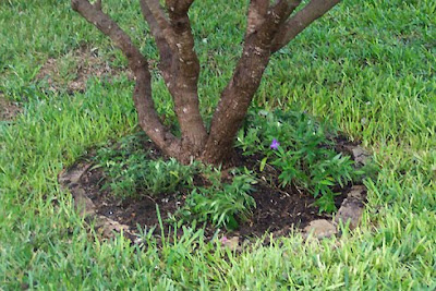Divasofthedirt, vitex and ruellia