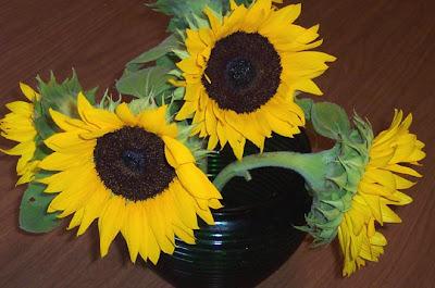 DivasoftheDirt, sunflowers