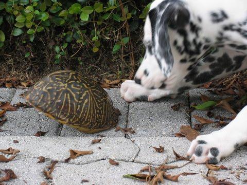 [jedi+turtle+2.jpg]