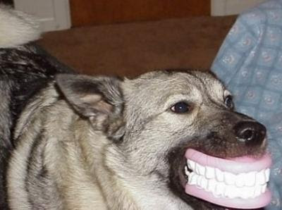 Pet Smile