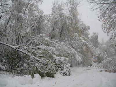 [snow+trees]