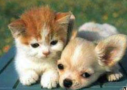 cute puppies and kittens wallpaper. puppy and kittens pictures.