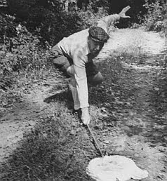 nabokov butterfly hunting