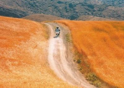 kiarostami the wind will carry us