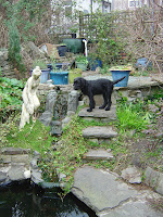 Yound Dog investigating waterfall