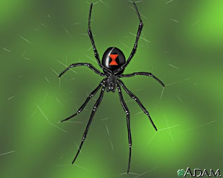 Latrodectus mactans, araña horrible, Venenosa, bicho