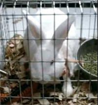 http://2.bp.blogspot.com/_6hgSmco4R9M/S0-s48PRDWI/AAAAAAAAGJY/3_IbUvOhW-I/s400/0_Rabbit.jpg