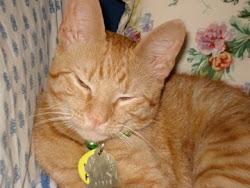 My Cat Henrik